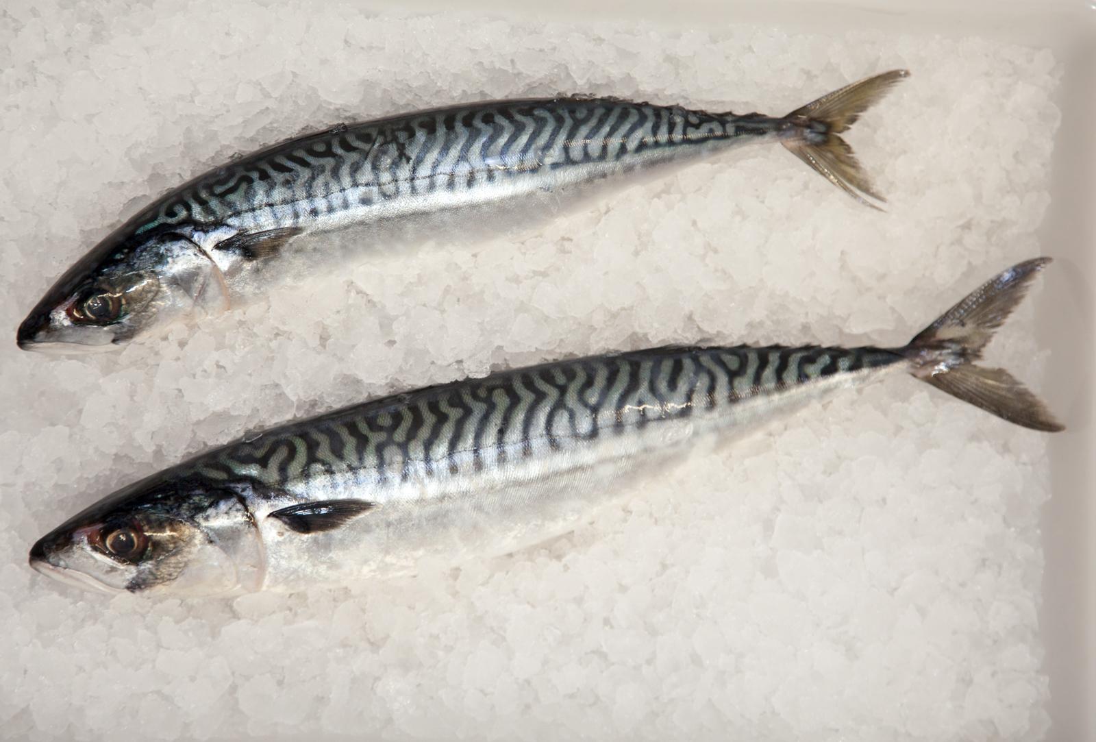 ecclesall_fisheries-2437