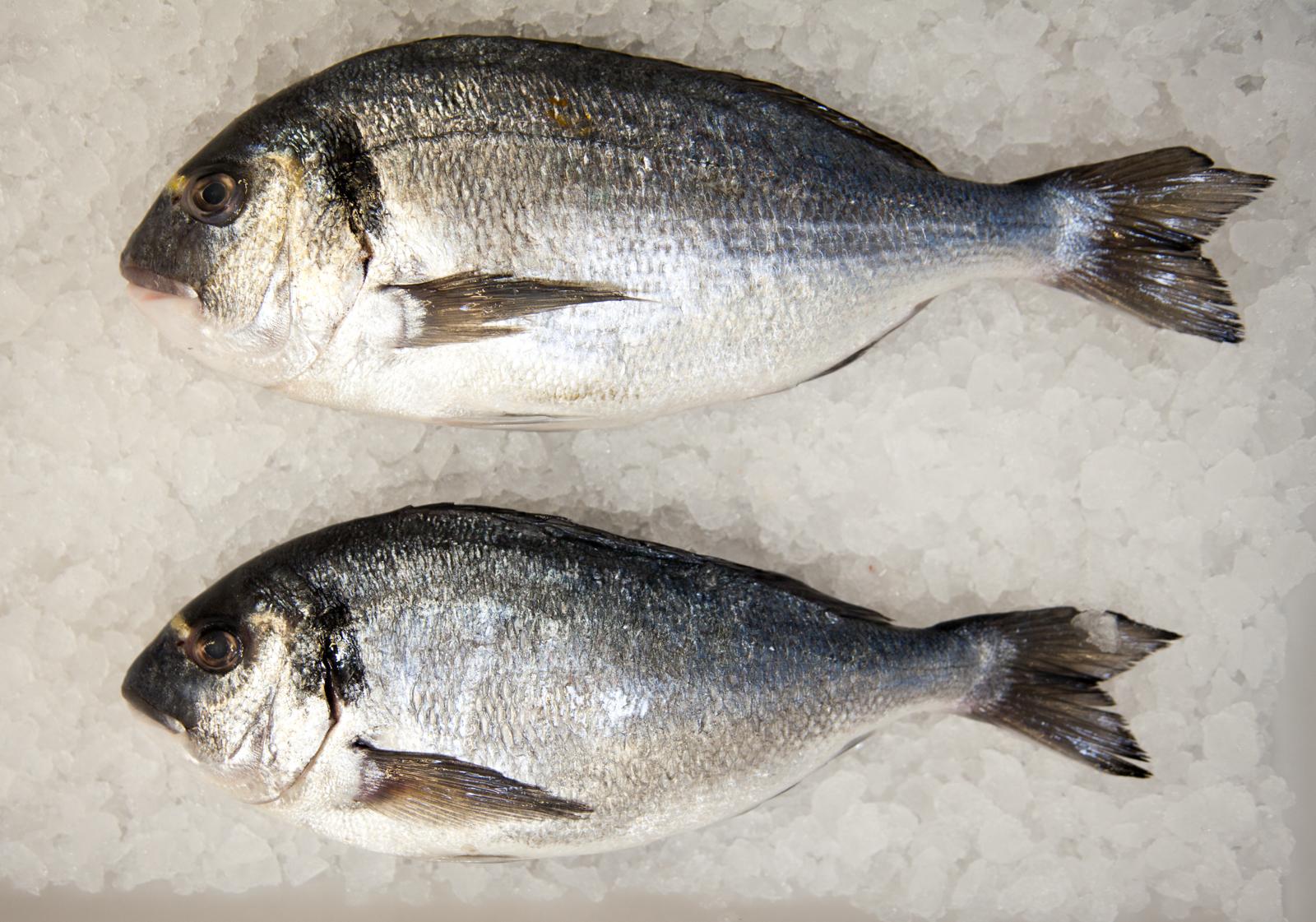 ecclesall_fisheries-2442-1