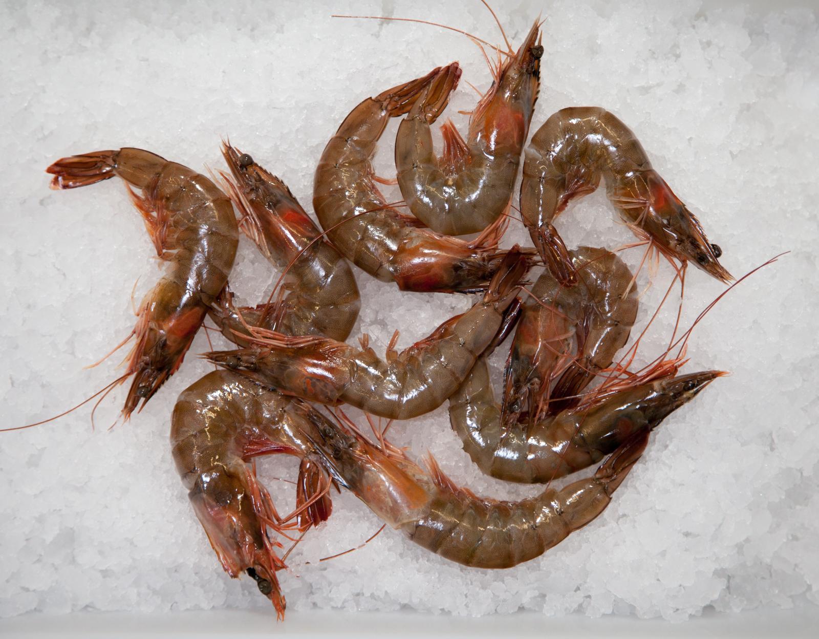 ecclesall_fisheries-2454